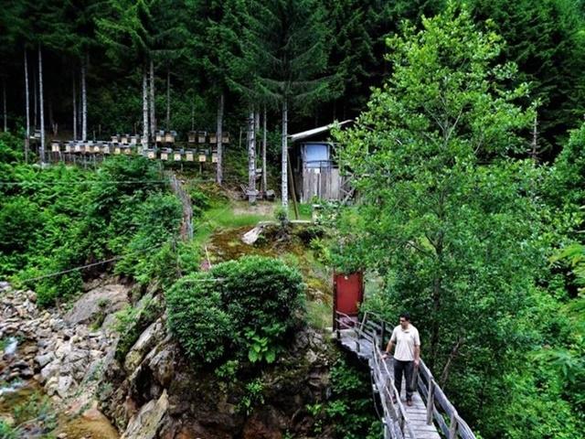 2020 yılının ilk bal ormanı Ardahan'a kuruluyor