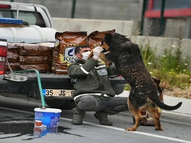 Esenyurt'ta sokak hayvanları unutulmadı