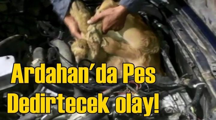 Ardahan'da Pes Dedirtecek olay!