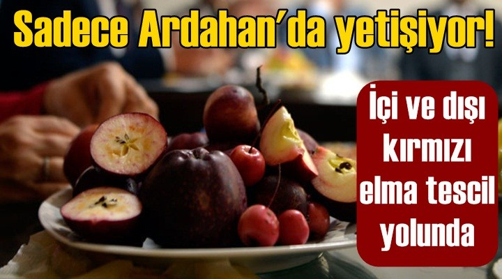 Sadece Ardahan'da yetişiyor!