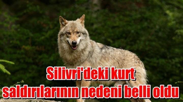 Silivri'deki kurt saldırılarının nedeni belli oldu