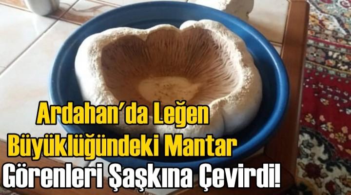 Bal Kabağı değil! Leğen boyutunda Mantar