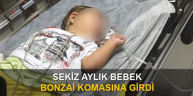 8 Aylık Bebek Bonzai Komasına Girdi!