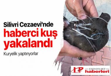 Silivri Cezaevi'nde haberci kuş yakalandı!