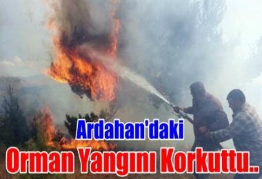 Ardahan'daki orman yangını korkuttu