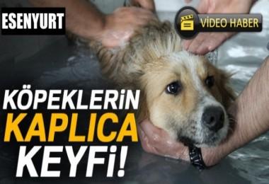 Esenyurt'ta Köpeklerin Kaplıca Keyfi