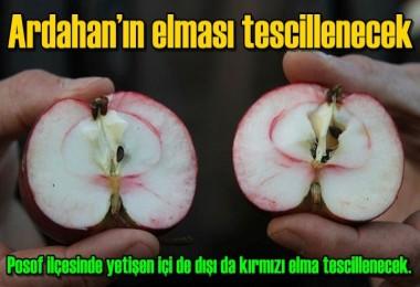 Ardahan elması tescillenecek