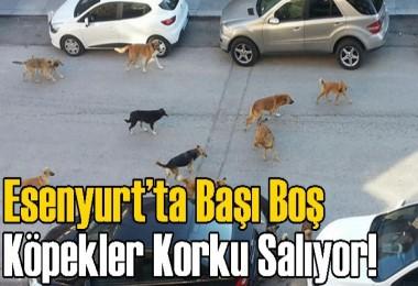 Esenyurt'ta Başı Boş Köpekler Korku Salıyor