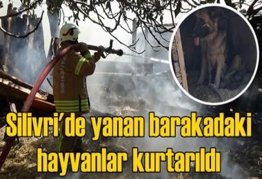 Silivri'de yanan barakadaki hayvanlar kurtarıldı