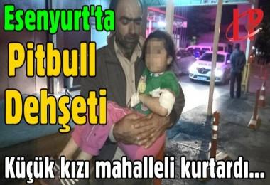 Esenyurt'ta Pitbull Dehşeti