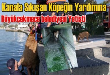 Büyükçekmece'de Kanala Köpek Sıkıştı