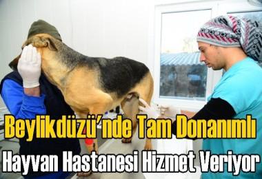 Beylikdüzü'nde Tam Donanımlı Hayvan Hastanesi
