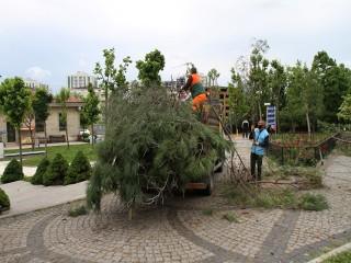 Esenyurt'ta Ağaçlar Budanıyor