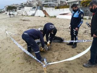 Silivri'de 90 kiloluk caretta ölü bulundu