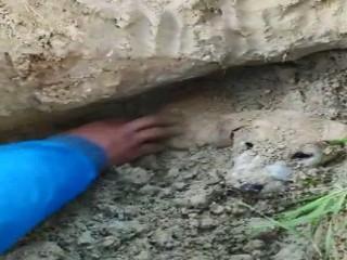 Vijdansızlar Diri diri toprağa gömülmüşler!