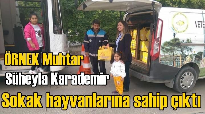 Süheyla Karademir, sokak hayvanlarına sahip çıktı