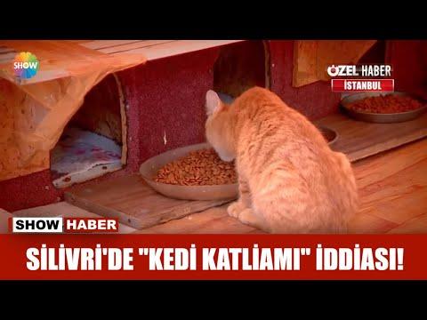 """Silivri'de """"Kedi katliamı"""" iddiası!"""